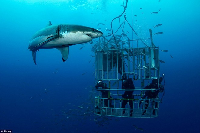 The heart-pounding shark watching tours in the world